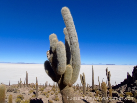 South America, nature, cactus, salt flats