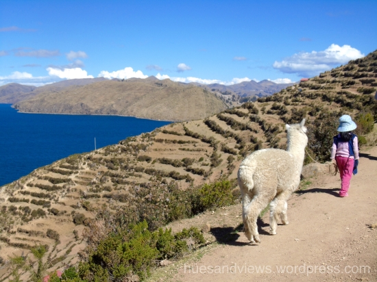 Lake Titicaca, Isla de Sol, alpaca girl