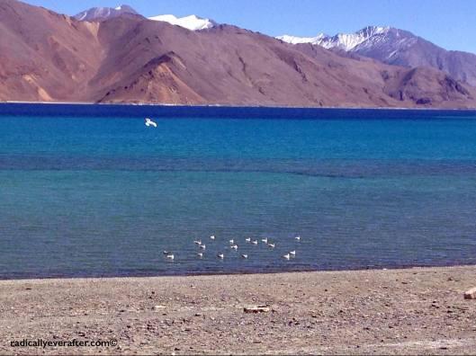 Pangong, Ladakh, Leh, Jammu, India, Himalayas, Blue, Lake