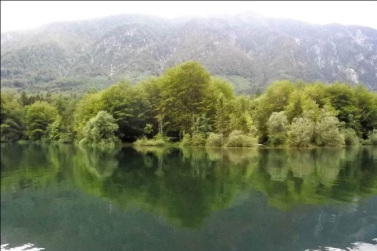 Lake Bohinj trees, Triglav National Park, Slovenia